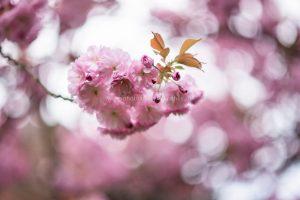 Blumen. Iryna Mathes Fotografie