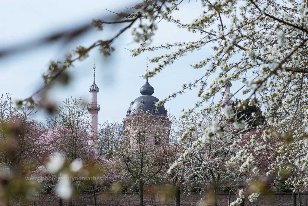 Momente. Frühling, Natur Fotos zum kaufen von Iryna Mathes