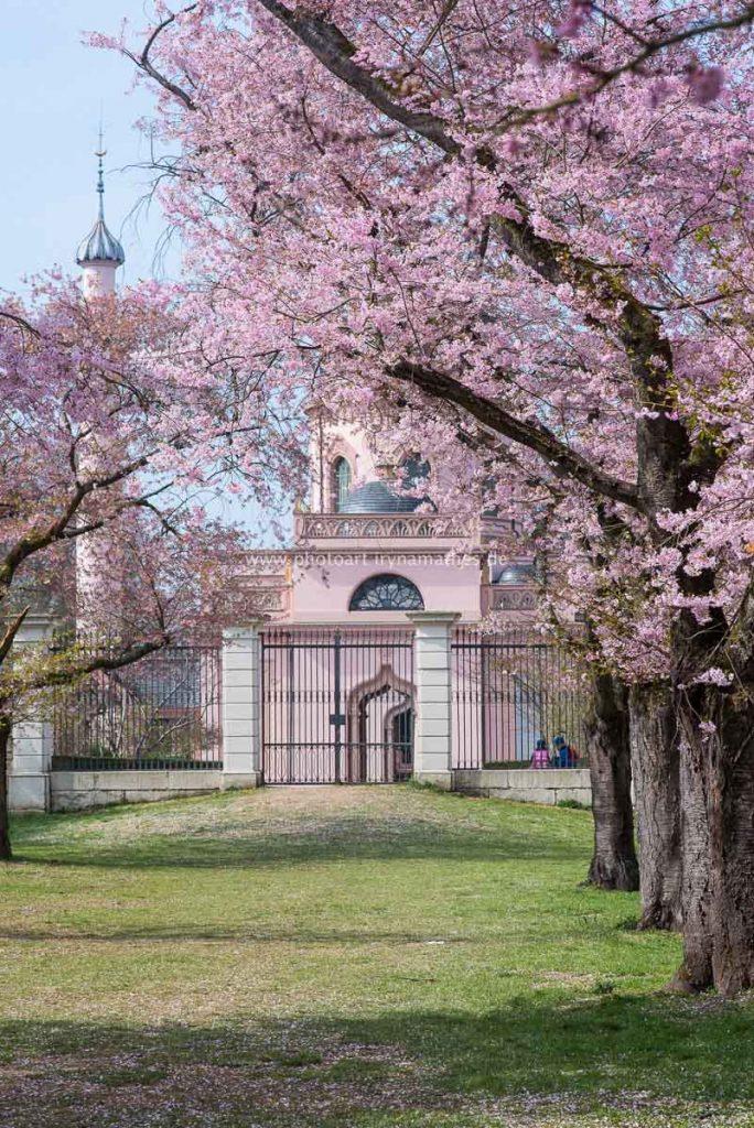 Momente. Frühling, Schwetzingen, Natur Fotos zum kaufen von Iryna Mathes