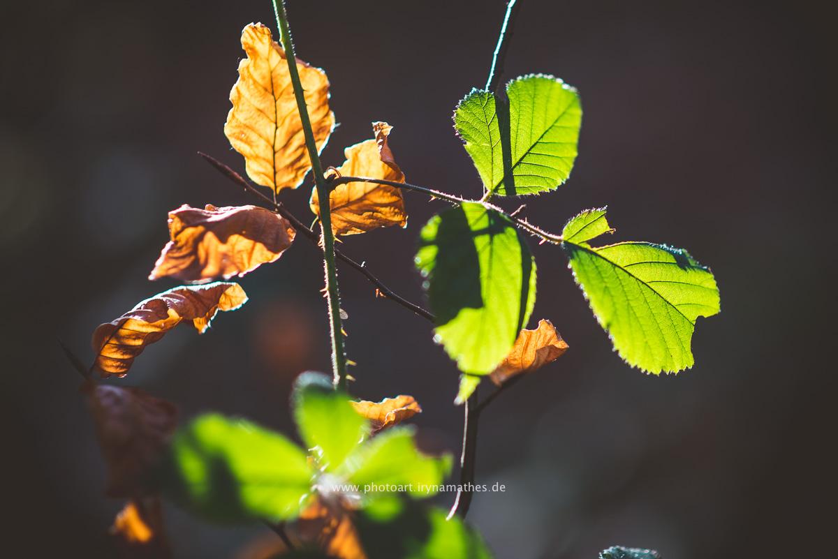 Natur Fotografie Iryna Mathes