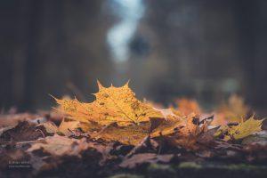 Herbst. Natur Fotografie. Foto günstig kaufen