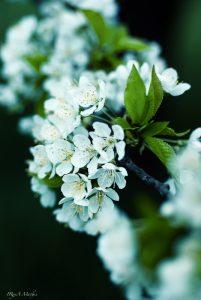 Frühling. Natur Photography. Foto günstig kaufen