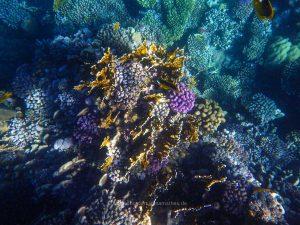 Egypt 2020, Underwater. Travel photography